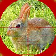 Sniper Rabbit Hunting 3D 1.3