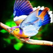 Birds Wallpapers 1.7