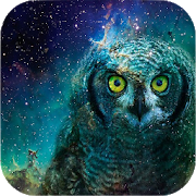 Owl Wallpapers 1.3