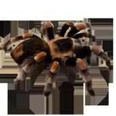 ArachnoSmash Free 1.1
