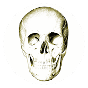Anatomy Quiz 4.8.1