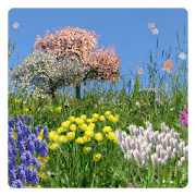 Spring Flowers Free Wallpaper 2 8 Apk Download Android