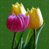 Tulips Snowfall Live Wallpaper 1.0