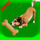 Dog Go 1.0
