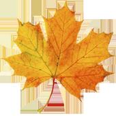 Leaf Demo 1.1.1