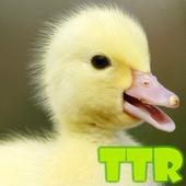 duck live wallpapers 10.02