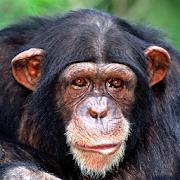 Chimp Memory Test 1.0.4