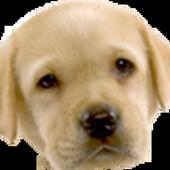 Cãozinho Max 5.1.2