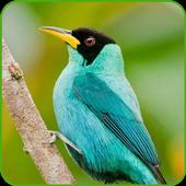 Fondos de Aves 2.2