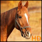 Horses wallpaper 1.3