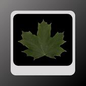 Leaves simple LWP 1.3.3