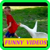Funny Videos 1.0.0