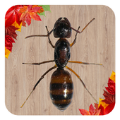 Ant Smasher Game 2 0 APK Download - Android Arcade Games