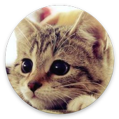 Cute kittens and cats wallpapers. High quality 2.1