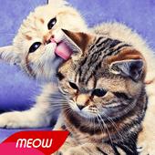 Cute Cat Backgrounds HD 1.5.0