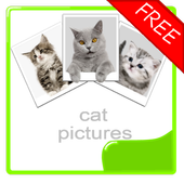 Cat Photos Album (free)