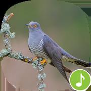Appp.io - Cuckoo Sounds 1.0.2
