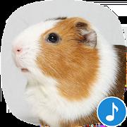 Appp.io - Guinea Pig Sounds 1.0.2