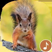 Appp.io - Squirrel Sounds 1.0.3