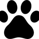 Edad de tu perro