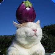 zen-cat 1.0.5