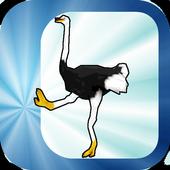 Sprint on ostrich