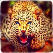 Jungle Cheetah Run 3D 1.0.0
