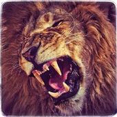 Jungle Lion Run 3D 1.0.0