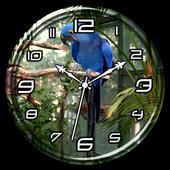 Hyacinth Macaw Clock Live WP 1.2