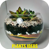 Plants Ideas 4.3