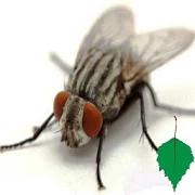 Flies 1.15.1