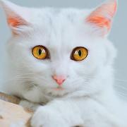 Talking Cute Cat 1.2.5