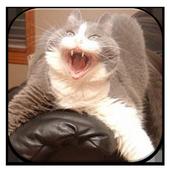 Horror Cat Episode Twosihotang appBoard