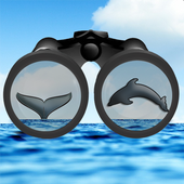 See & ID Dolphins & Whales