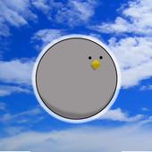 【超絶連打】黒鳩さん、空を飛ぶ 1.0