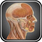 Атлас анатомии человека 1.0