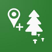 Forest Navigator 3.8.4