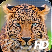 Leopard Wallpaper 1.0.1