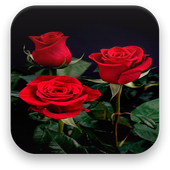 Rose Live Wallpaper 1.5