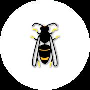 Asian Hornet Watch 1.1.1