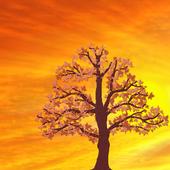 Beautiful Sunset LiveWallpaper 1.0