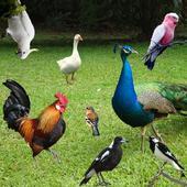 Bird Sounds 1.14