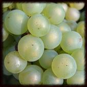 White Wine Wallpapers - Free 1.0