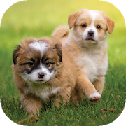 Puppy Wallpapers HD 2.0