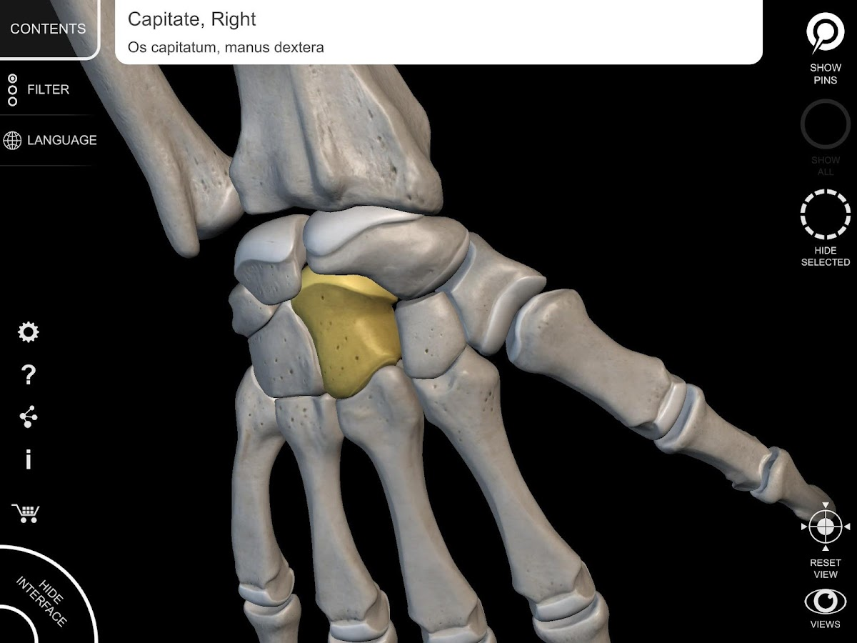 Skeleton   3D Anatomy 2.3.3 APK Download - Android Medical Apps