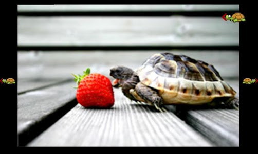 turtles for babies 1.0.0 screenshot 5