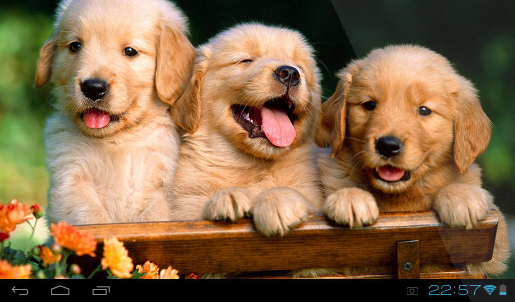 Puppies Live Wallpaper 1.0 APK Download