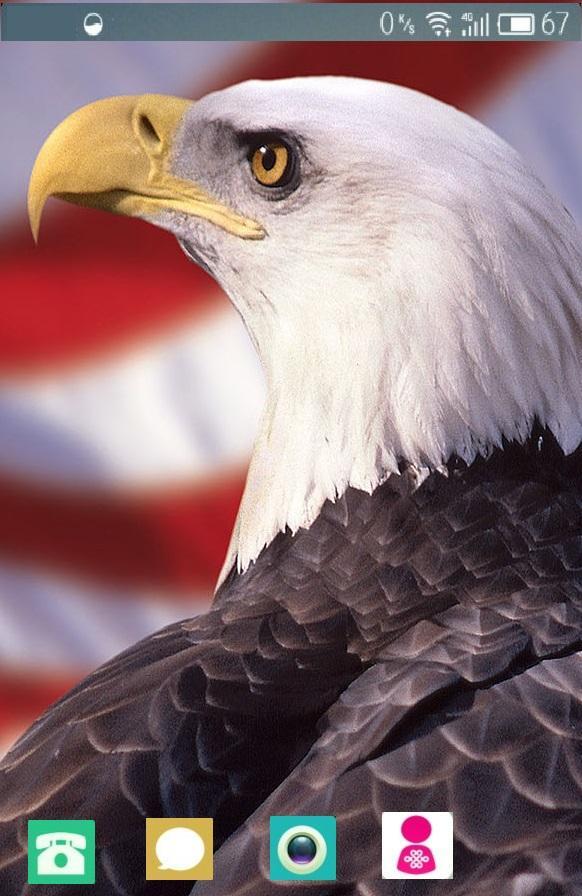 Bald Eagle Wallpaper 1 01 Apk Download Android