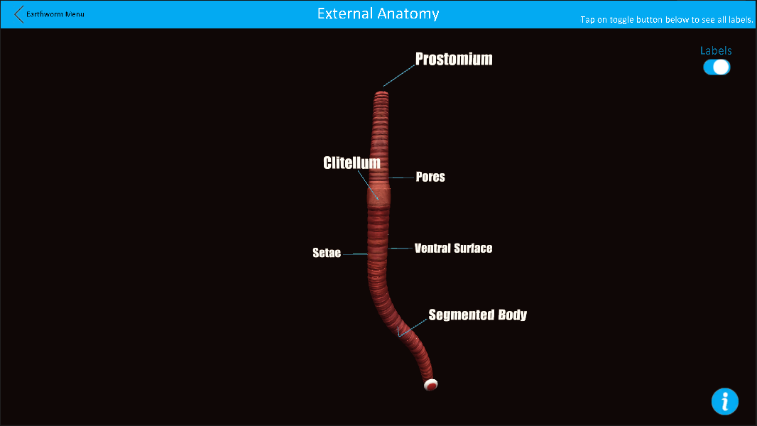 Dissection Lab 11 Screenshot 1 2