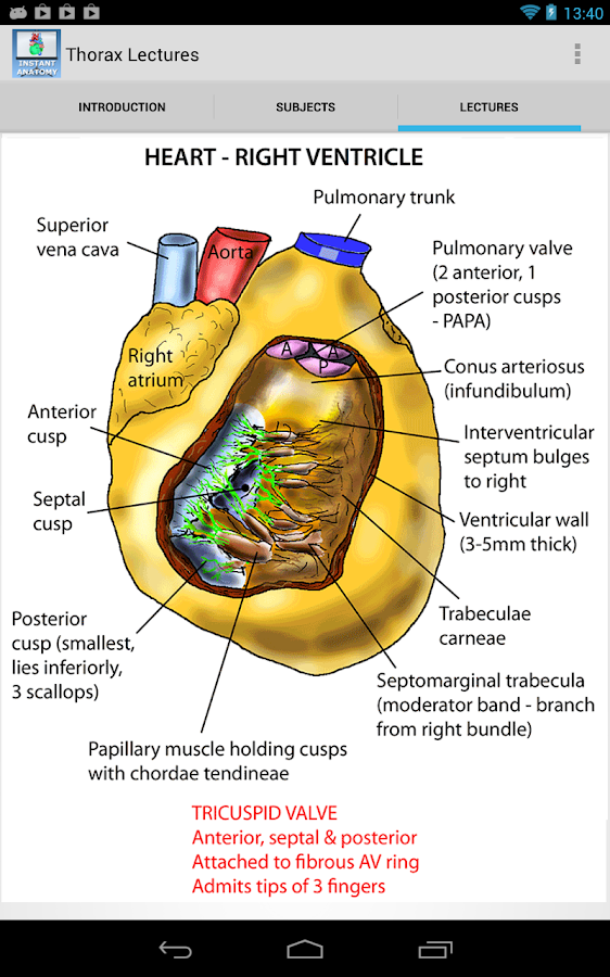 Abdomen and Thorax Lectures APK Download - Android Medical Apps